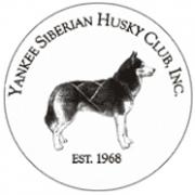 YankeeSiberianHuskyClub
