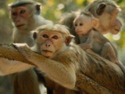 A scene from 'Monkey Kingdom'