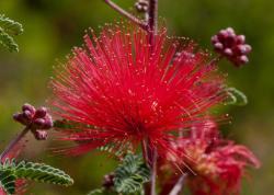 Gottlieb Native Garden: A Southern Californian Oasis
