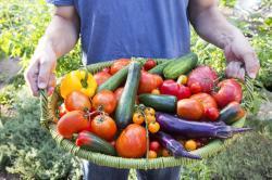 7 Reasons Why Millennials Love Gardening