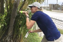 In this photo made available by the Florida Keys Mosquito Control District, research entomologist Catherine Pruszynski releases male mosquitos in Key West, Fla., testing a new way to kill mosquitoes that carry Zika and other viruses Tuesday, April 18, 2017