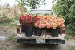 The New Look in Floral Arrangements: Wild, Seasonal, Local