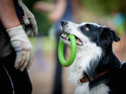 Community Pet Events