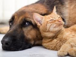 Ten Top Pet Health Concerns: The Ways to Prevent or Resolve Them
