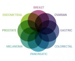 Genetic Counselors Help Transgender Patients Understand Cancer Risks Associated withBRCAMutations Before Transition