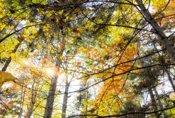Still Warm in Maine, But Leaves Say Autumn is Here