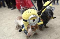 Annual Tompkins Square Halloween Dog Parade in New York.