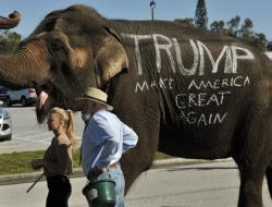 A circus elephant greets supporters of Donald Trump outside a campaign rally Saturday, Nov. 28, 2015 in Sarasota, Fla.