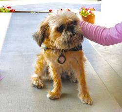 Airport to Provide Therapy Dogs for Stressed Travelers