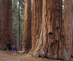 California's Redwood Forest.