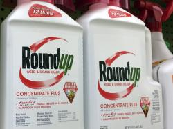 In this Jan. 26, 2017, file photo, containers of Roundup, a weed killer made by Monsanto, is seen on a shelf at a hardware store in Los Angeles