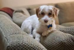 Lawmakers Look to Ban Pet Leasing