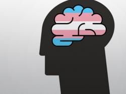 Brain Scans Reveal Trans Brains