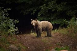 Last week, two men were hospitalized with serious injuries after a bear attacked them in central Romania.