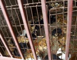Dogs are kept in a cage of a wholesale supplier.