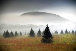 A Christmas tree farm near Starks Mountain in Fryeburg, Maine.