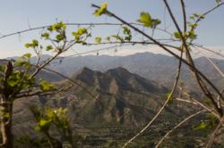 This May 30, 2016, file photo shows patches of deforestation in the mountains overlooking the village of El Carrizal, in Guatemala's eastern state of Chiquimula