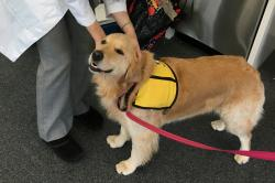 This March 2017 photo provided by Johns Hopkins University shows therapy dog Winnie at the university's hospital in Baltimore, Md.