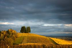 Willamette Valley, Oregon.