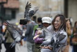 A woman feeds pigeons at Bolivar Square in Bogota, Colombia, Tuesday, Oct. 2, 2018. Feeding pigeons corn and taking a photo with them in Bolivar Square has been something of a local tradition for decades