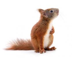 Flight Delayed After Woman Brings Squirrel on Plane