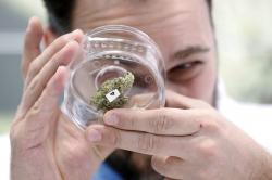 In this Oct. 17, 2018 file photo, Jean Marc looks at a sample at a cannabis store in Winnipeg, Manitoba