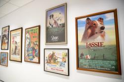 Movie posters on display at the American Kennel Club's Museum of the Dog in New York.