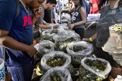 In this Oct. 20, 2018, file photo, a customer takes a sniff test from the selection of marijuana strains at Miyagi LA booth at the cannabis-themed Kushstock Festival at Adelanto, Calif.