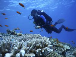 This Thursday, Jan. 17, 2019 photo, provided by the Interuniversity Institute for Marine Sciences, IUI, shows corals at the institute's coral farm in the Red Sea city of Eilat, southern Israel