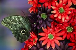 "A butterfly sits upon an arraignment during a preview of the ""Flower Power"" themed Philadelphia Flower Show ."