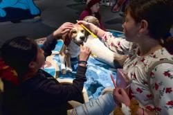 "In this Tuesday, March 12, 2019 photo students from the Theodore T. Alexander Science Center School practice brushing dog's teeth at an interactive display during a preview of an exhibition called ""Dogs! A Science Tail"" at the California Science Center in Los Angeles"