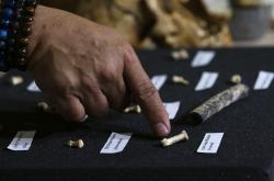 In this April 11, 2019, photo,, Filipino archeologist Armand Salvador Mijares shows fossil bones and teeth they recovered from Callao Cave belonging to a new species they called Homo Luzonensis during a press conference in metropolitan Manila, Philippines