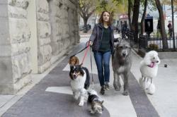 'A Dog's Journey'