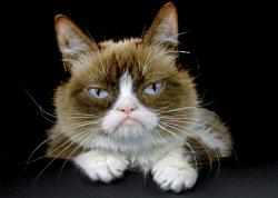 This Dec. 1, 2015 file photo shows Grumpy Cat posing for a photo in Los Angeles. Grumpy Cat