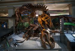 "A Tyrannosaurus rex skeleton at he Smithsonian's National Museum of Natural History's ""David H. Koch Hall of Fossils-Deep Time."""