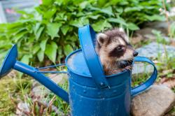 How to Handle Critters in Your Yard (Hint: Not with a Thermos)