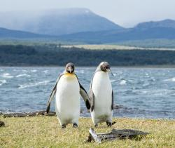 Gay Penguins at Berlin Zoo Just Became Dads