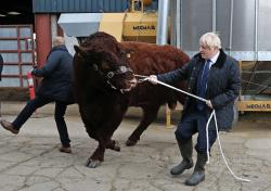 A bull bumps into a plain clothes police officer, left, while being walked by Britain's Prime Minister Boris Johnson during a visit to Darnford Farm in Banchory near Aberdeen, Scotland, Friday Sept. 6, 2019, to coincide with the publication of Lord Bew's review and an announcement of extra funding for Scottish farmers