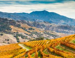 Alexander Valley, Sonoma County, California.