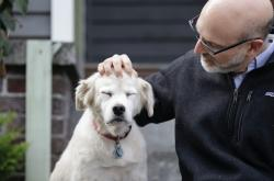 In this Monday, Nov. 11, 2019 photo, University of Washington School of Medicine researcher Daniel Promislow, the principal investigator of the Dog Aging Project grant, rubs the head of his elderly dog Frisbee at their home in Seattle
