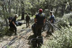 A group including U.S. Forest Service rangers, scientists and conservationists work to reclaim a so-called trespass grow site where nearly 9,000 cannabis plants were illegally cultivated.