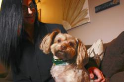 Amy Carter looks at her Yorkshire terrier-Chihuahua mix Bentley, who has epilepsy..
