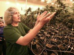 In this Aug. 22, 2019 photo, lead grower Elizabeth Keyser, talks about flowering medical marijuana plants being grown with special grow lights during a media tour of the Curaleaf medical cannabis cultivation and processing facility in Ravena, N.Y.