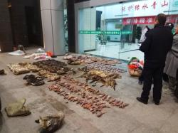 Police look at items seized from store suspected of trafficking wildlife in Guangde city in central China's Anhui Province.