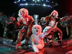 The cast of the national tour of Cats, currently plaing at the Cadillac Palace Theatre