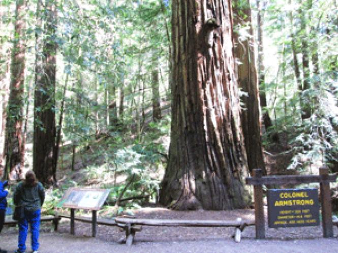 """Visitors enjoy some of the tallest redwood trees in the<br />area at the""""/></a></p> <h2>Twink movie Amongst the tall redwood trees, Chris finds a isolated</h2> <p><iframe height=481 width=608 src="""