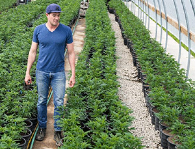SPARC CEO Erich Pearson walks among rows of cannabis<br>plants at his farm in Sonoma County. Photo: Erich Pearson<br><br>