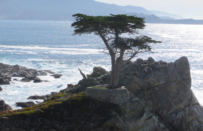 The famous, and protected, Lone Cypress stands majestically on the 17-Mile Drive. Photo: Charlie Wagner