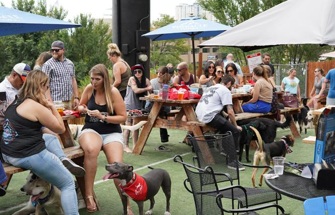 "People and their dogs enjoyed Orijen's ""Eat Like Your Orijen Dog"" brunch in Denver last weekend. A similar event is planned for San Francisco September 9. Photo: Courtesy Champion Petfoods"