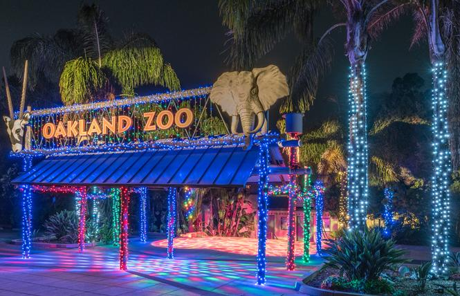The Oakland Zoo will be decked out for ZooLights beginning December 7. Photo: Courtesy Oakland Zoo